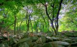 Private forest, Korea