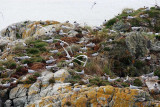 The ballet of the terns
