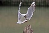 Landing (2)
