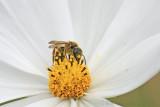 Pompe à nectar