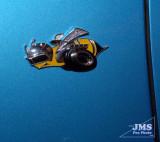 CAS-JS-0318-02-27-07.jpg