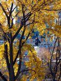 la statue parmi les arbres