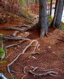 la mer de racines