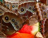 le nectar