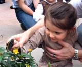 le papillon et l'enfant