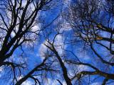 arbres sur fond de ciel bleu
