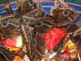 cafeteria des papillons