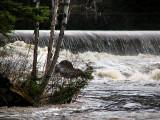la chute de la rivière du Moulin