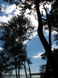 profil d'arbres à la plage