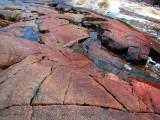 carapace rouge sur la rivière du Moulin