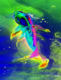 Vision d'une carpe au LSD