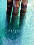 les petits poissons du quai