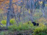 broûter dans la forêt