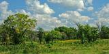 Oak Savannah