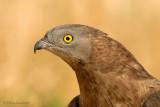 Birds of prey & Vultures.