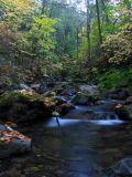 Little Grider creek autumn colors