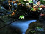 Little Grider creek leaves and water