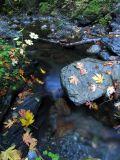 Rocks, water, leaves, time