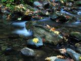 Little Grider Creek autumn scene