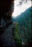Eagle Creek Trail cable 1979