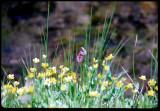 Hart's Meadow flowers