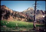 Siligo Meadows at the head of Long Canyon