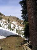 PCT near Carter Meadows