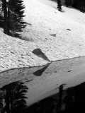 Section Line lake reflections BW