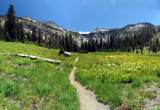 Grizzly Meadow