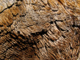 Weathered hemlock stump wood grain