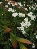Trailside flower display
