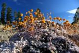Strange flowers along trail