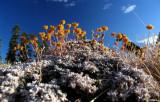 Strange flowers and mini dog along trail