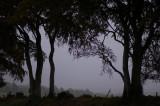 9th October 2007  misty
