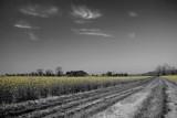 (Almost) B&W Summer Fields