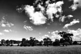 Summer Clouds 1