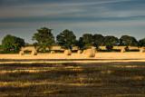 Warwickshire Harvest