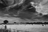 Warwickshire Field