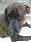 spca dog for adoption
