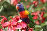 Australia - Birds