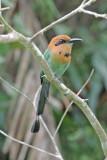 Panama - Birds
