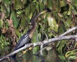 Snake Bird1