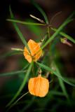 Tiny Orange