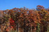 Fall Colours near Albany