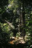Rainforest at Lin Hat, Ko Samui