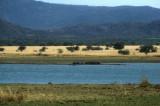 Hippopotumas, Pilanesberg