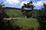 Jordan Vineyard, Western Cape
