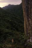 Te Rua Manga (needle)