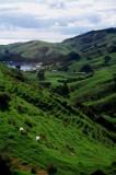 Green Hills at Coromandel