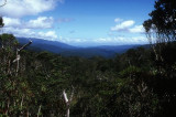 Beech Forest on the Heaphy Track